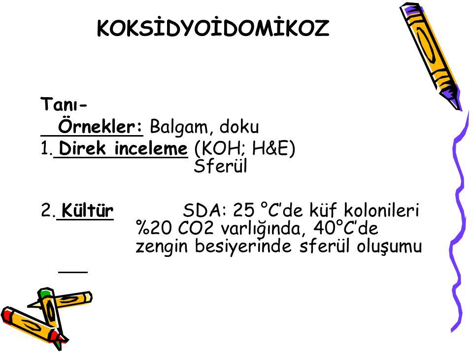 PARAKOKSİDYOİDOMİKOZİS Tanı-I Örnekler: Balgam, doku 1.