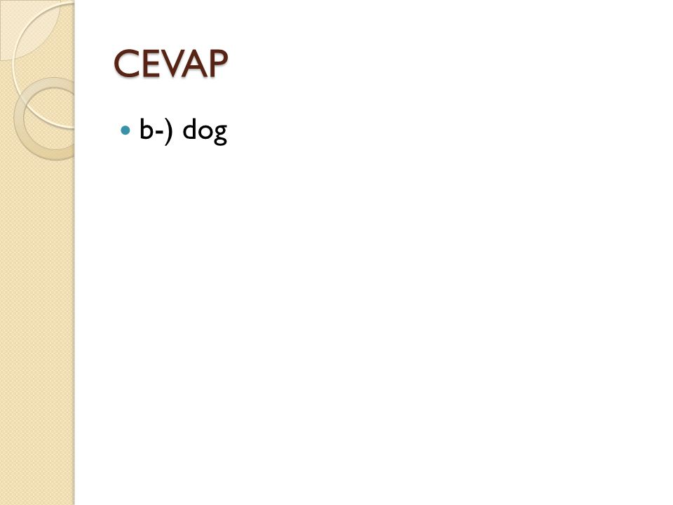 CEVAP b-) dog