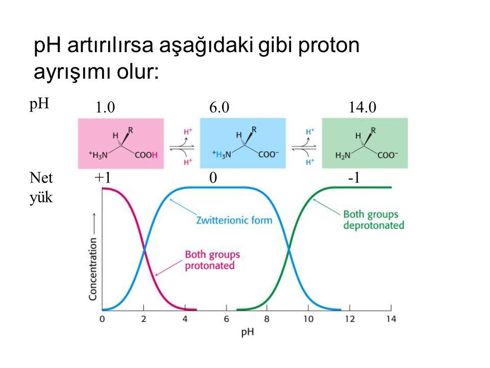 pH artırılırsa aşağıdaki gibi proton ayrışımı olur: pH 1.06.014.0 Net yük +10