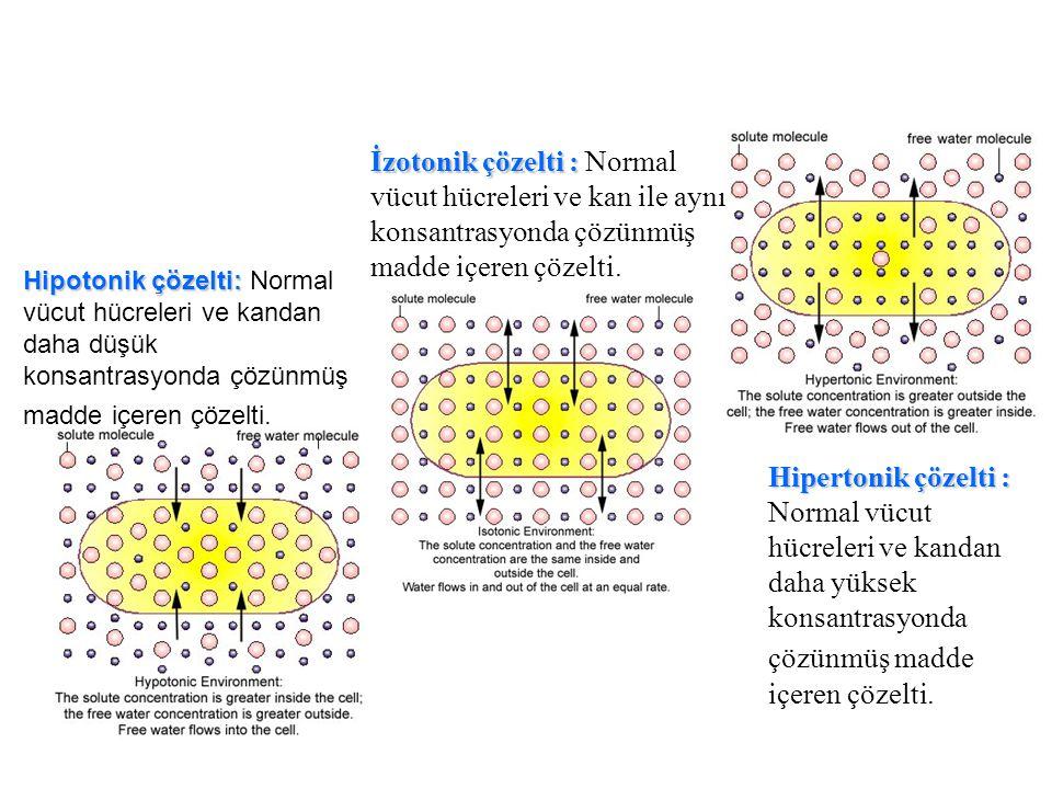Hipotonik çözelti: Hipotonik çözelti: Normal vücut hücreleri ve kandan daha düşük konsantrasyonda çözünmüş madde içeren çözelti. İzotonik çözelti : İz