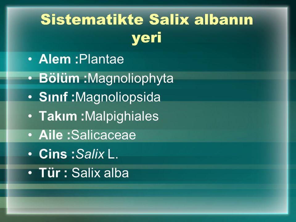 Sistematikte Salix albanın yeri Alem :Plantae Bölüm :Magnoliophyta Sınıf :Magnoliopsida Takım :Malpighiales Aile :Salicaceae Cins :Salix L. Tür : Sali