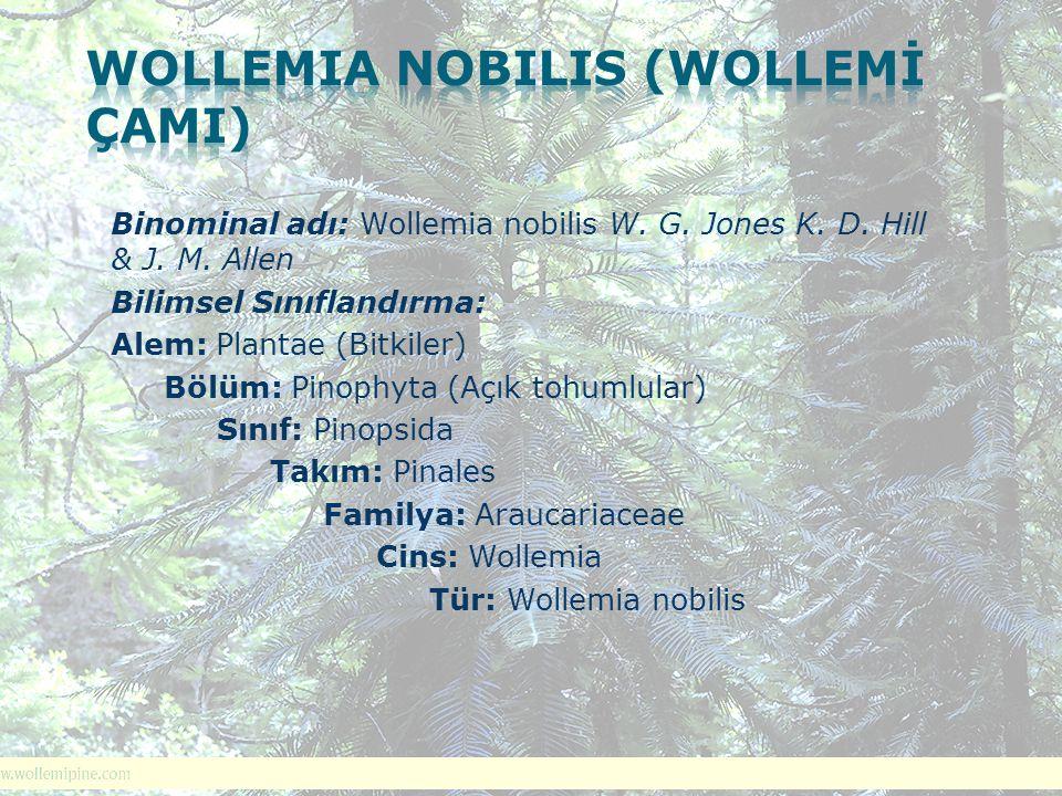 Binominal adı: Wollemia nobilis W. G. Jones K. D. Hill & J. M. Allen Bilimsel Sınıflandırma: Alem: Plantae (Bitkiler) Bölüm: Pinophyta (Açık tohumlula