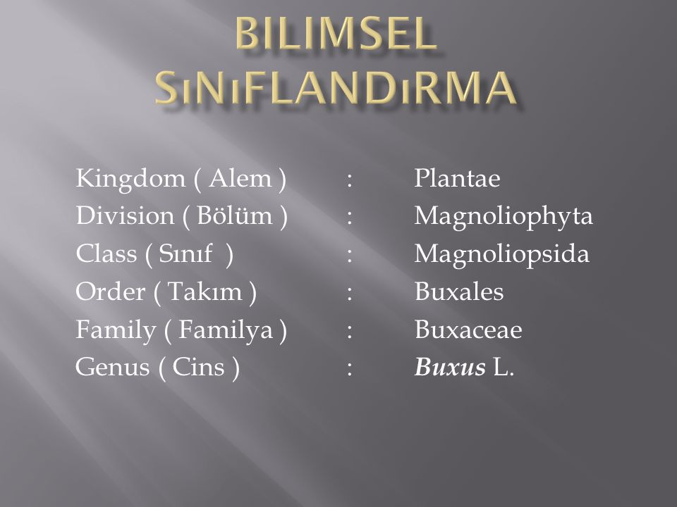 Kingdom ( Alem ) :Plantae Division ( Bölüm ):Magnoliophyta Class ( Sınıf ):Magnoliopsida Order ( Takım ):Buxales Family ( Familya ):Buxaceae Genus ( Cins ): Buxus L.