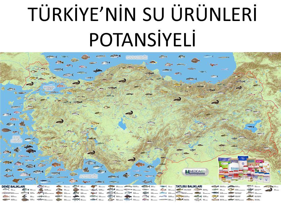 TÜRKİYE'NİN SU ÜRÜNLERİ POTANSİYELİ