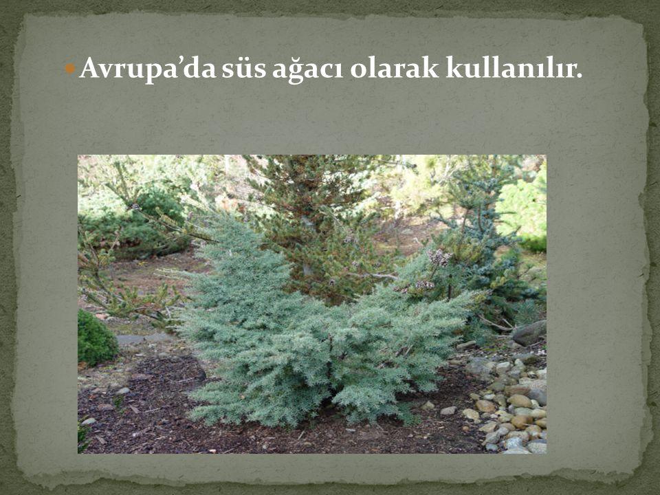 Toprak erozyonlarına karşı korumada özel önlem taşımaktadır.