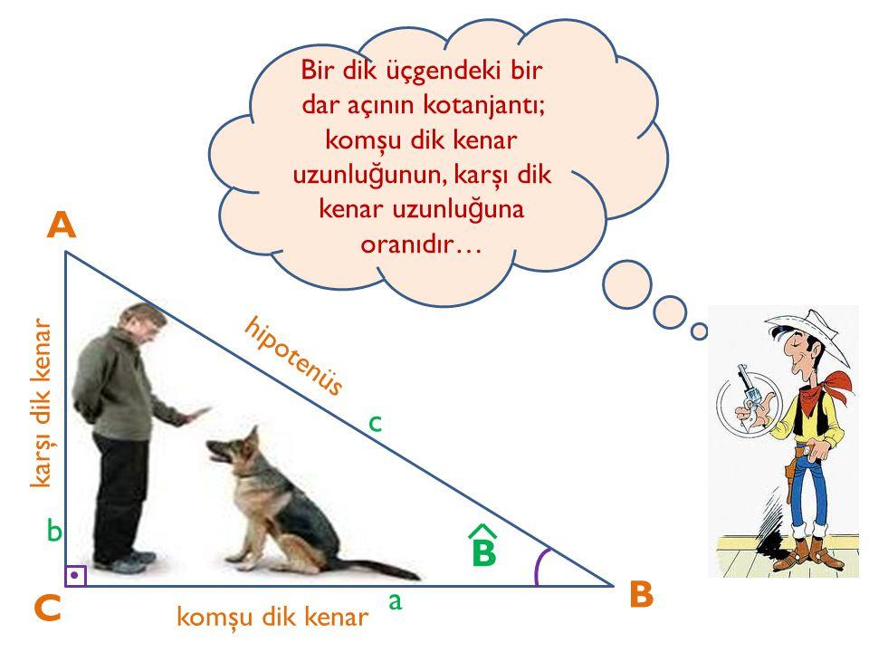A C B karşı dik kenar komşu dik kenar hipotenüs a b c B Bir dik üçgendeki bir dar açının kotanjantı; komşu dik kenar uzunlu ğ unun, karşı dik kenar uz