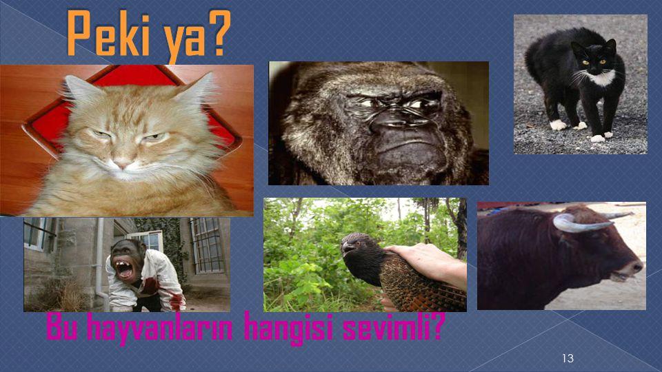 Bu hayvanların hangisi sevimli? 13