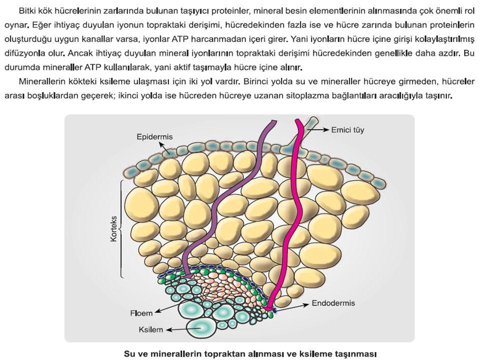  Esen Yayınları Biyoloji Konu Anlatımı  MEB Biyoloji Ders Kitabı  Sorular: Bazı internet sitelerinden derlenmiştir.