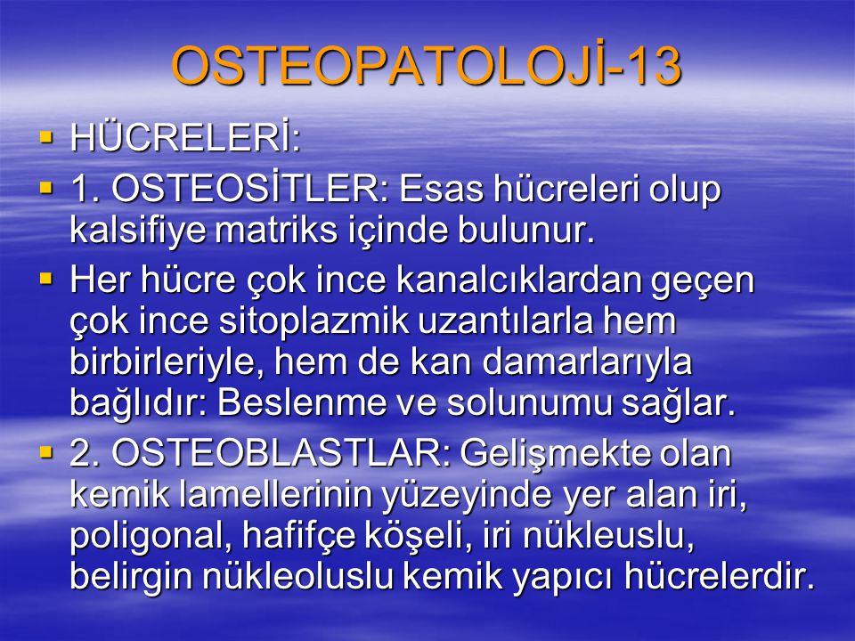 OSTEOPATOLOJİ-13  HÜCRELERİ:  1. OSTEOSİTLER: Esas hücreleri olup kalsifiye matriks içinde bulunur.  Her hücre çok ince kanalcıklardan geçen çok in
