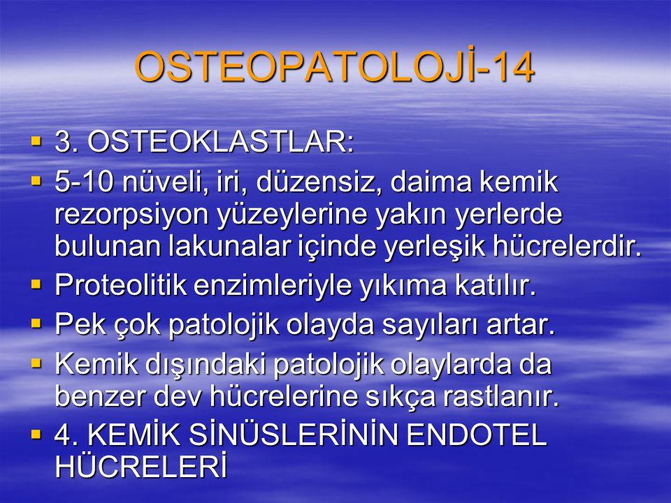 OSTEOPATOLOJİ-14  3. OSTEOKLASTLAR:  5-10 nüveli, iri, düzensiz, daima kemik rezorpsiyon yüzeylerine yakın yerlerde bulunan lakunalar içinde yerleşi