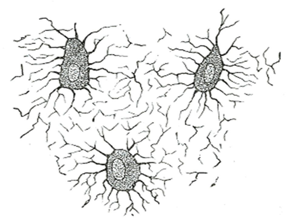 OSTEOPATOLOJİ-15  Kemikler makroskopik ve mikroskopik yapısına göre kompakt (kortikal) ve kansellöz (medüller, süngerimsi) kemiklerin bir karışımıdır.