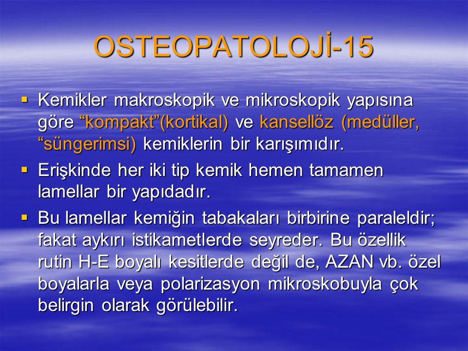 """OSTEOPATOLOJİ-15  Kemikler makroskopik ve mikroskopik yapısına göre """"kompakt""""(kortikal) ve kansellöz (medüller, """"süngerimsi) kemiklerin bir karışımıd"""