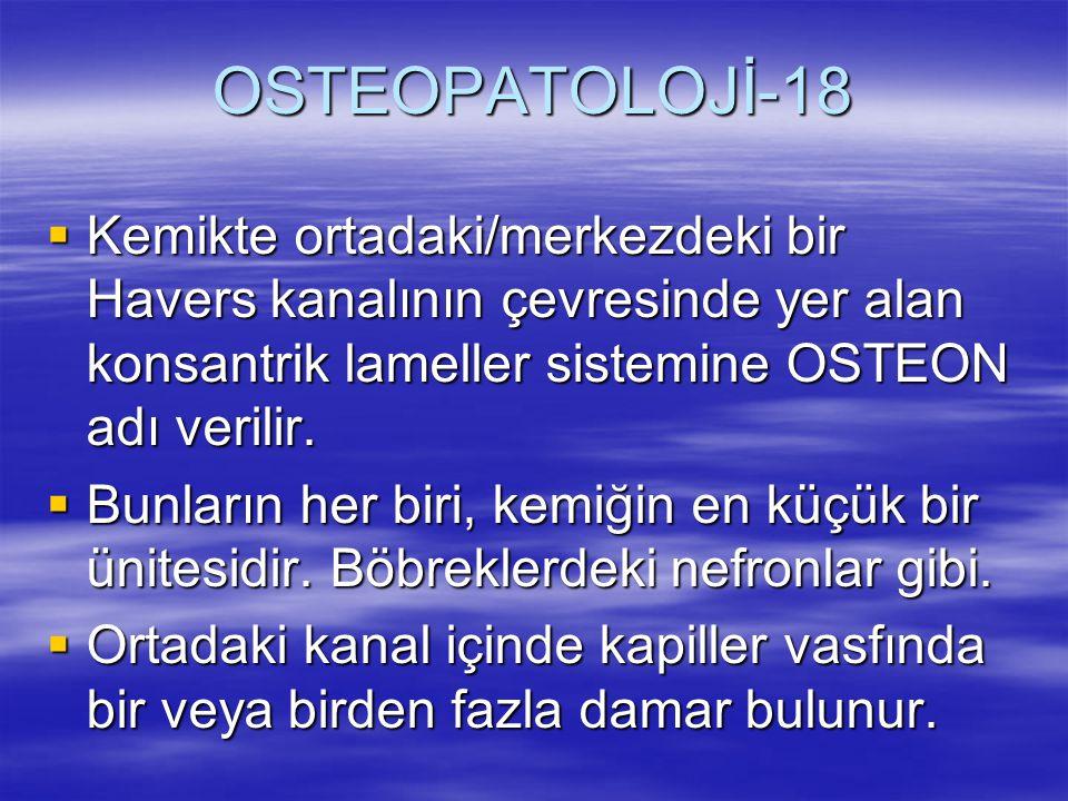 OSTEOPATOLOJİ-18  Kemikte ortadaki/merkezdeki bir Havers kanalının çevresinde yer alan konsantrik lameller sistemine OSTEON adı verilir.  Bunların h