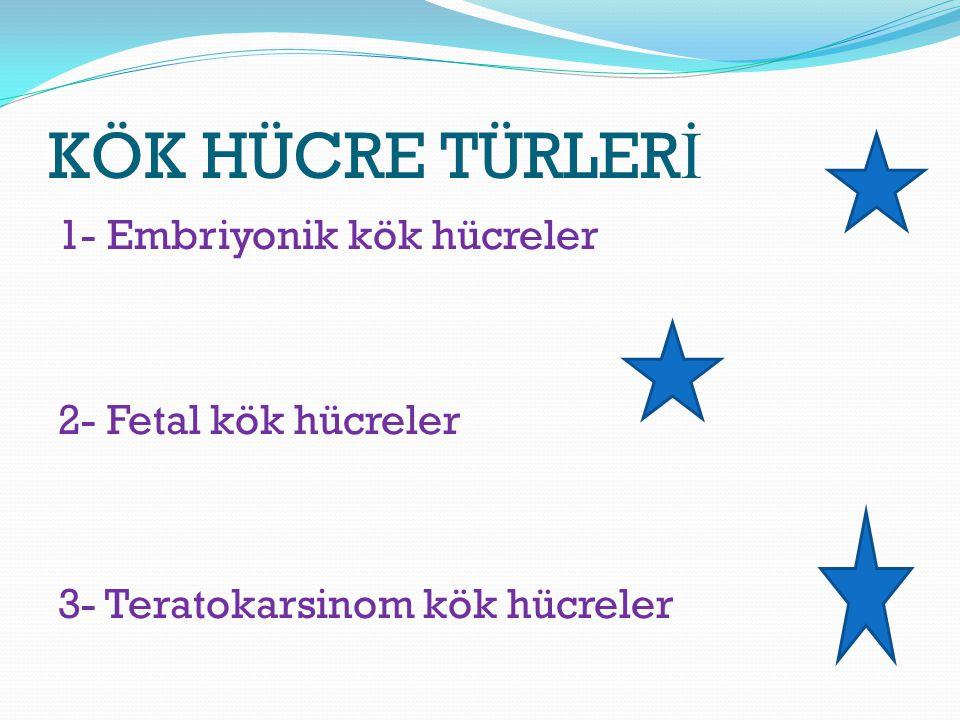 KÖK HÜCRE TÜRLER İ 1- Embriyonik kök hücreler 2- Fetal kök hücreler 3- Teratokarsinom kök hücreler