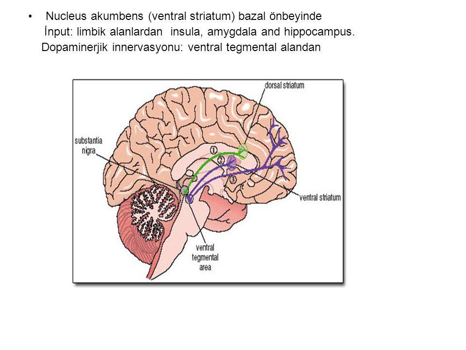ventral tegmental alandan: 1- mesokortikal sistem:Dorsolateral prefrontal alana: yürütücü işlevler 4-mesolimbik sistem: akumbens çekirdeği ve limbik yapılara
