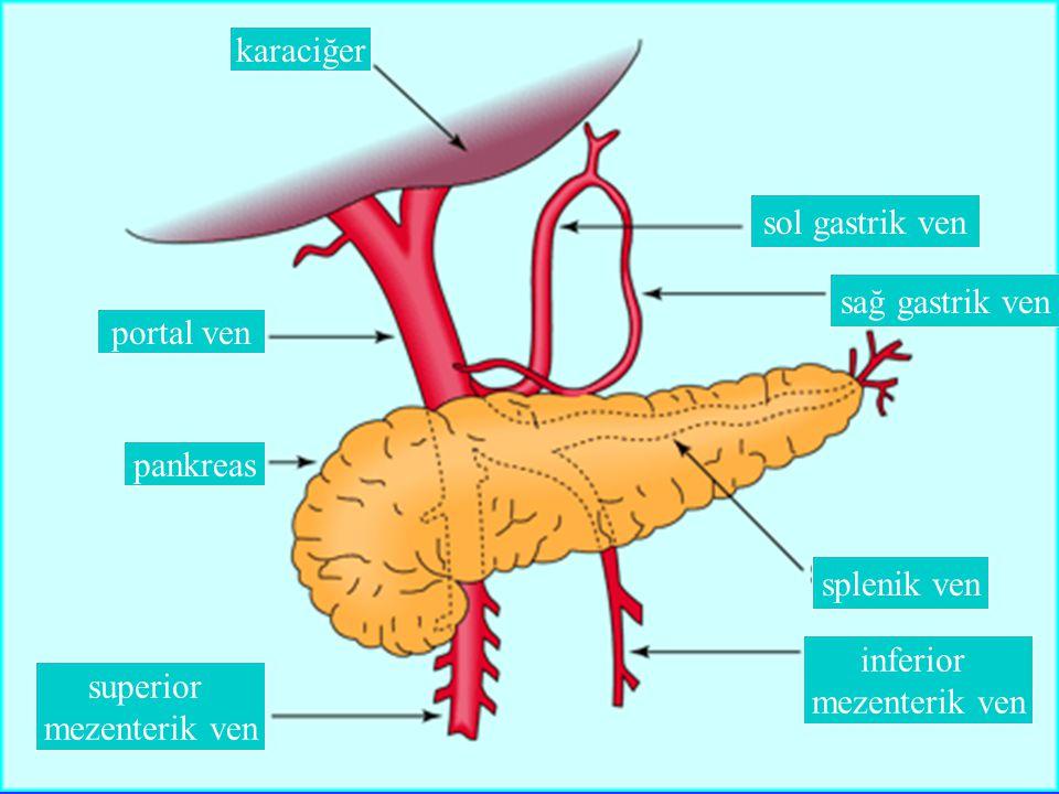 karaciğer portal ven pankreas superior mezenterik ven inferior mezenterik ven splenik ven sağ gastrik ven sol gastrik ven