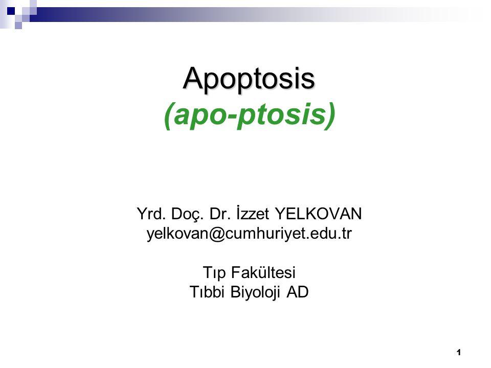 1 Apoptosis Apoptosis (apo-ptosis) Yrd. Doç. Dr. İzzet YELKOVAN yelkovan@cumhuriyet.edu.tr Tıp Fakültesi Tıbbi Biyoloji AD