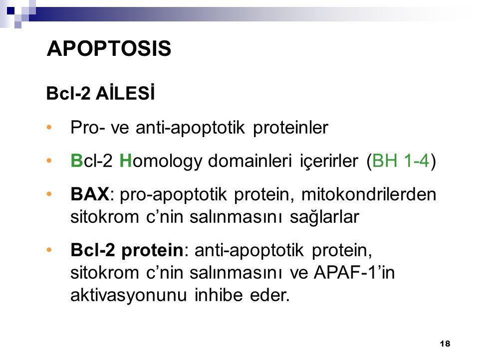 18 Bcl-2 AİLESİ Pro- ve anti-apoptotik proteinler Bcl-2 Homology domainleri içerirler (BH 1-4) BAX: pro-apoptotik protein, mitokondrilerden sitokrom c