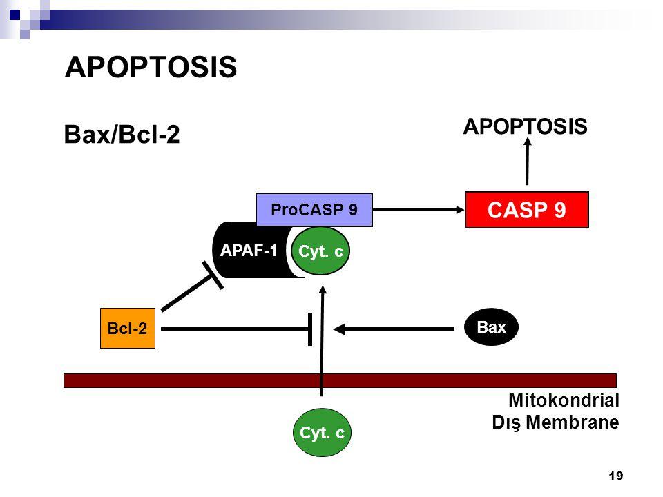 19 Bax/Bcl-2 APOPTOSIS Mitokondrial Dış Membrane Cyt. c Bax APAF-1 ProCASP 9 CASP 9 Cyt. c APOPTOSIS Bcl-2
