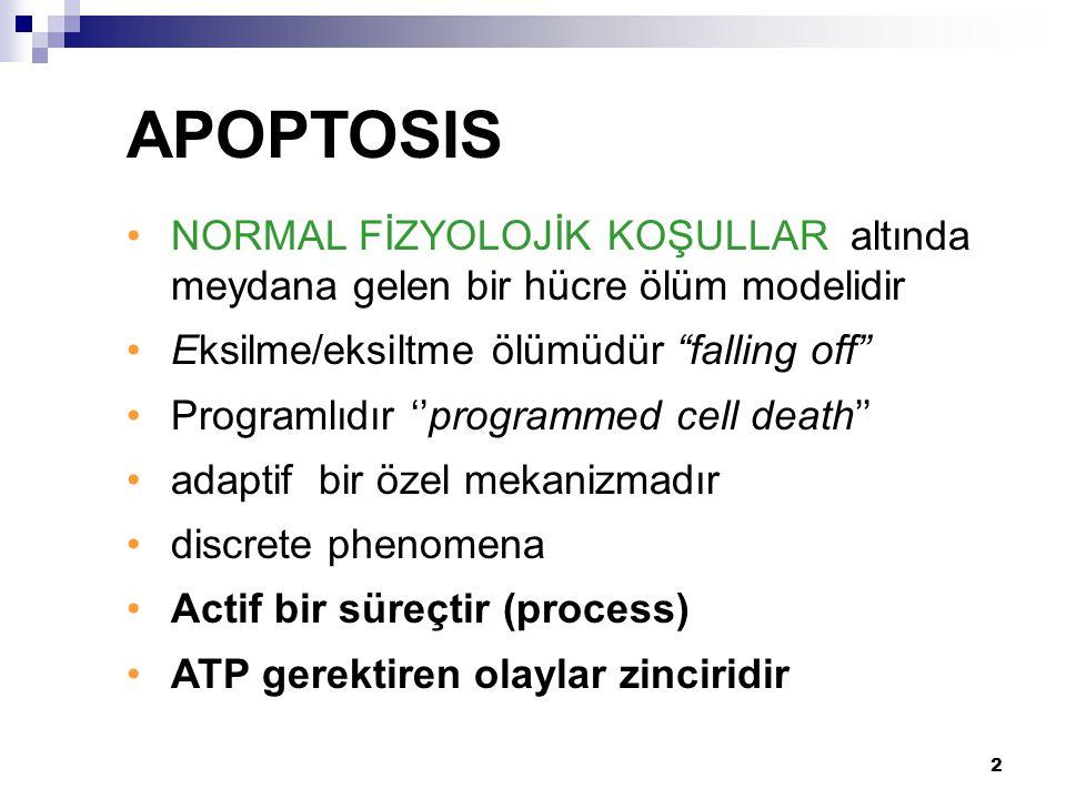 """2 NORMAL FİZYOLOJİK KOŞULLAR altında meydana gelen bir hücre ölüm modelidir Eksilme/eksiltme ölümüdür """"falling off"""" Programlıdır ''programmed cell dea"""