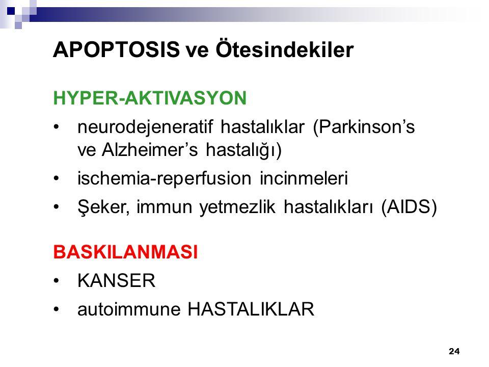 24 APOPTOSIS ve Ötesindekiler HYPER-AKTIVASYON neurodejeneratif hastalıklar (Parkinson's ve Alzheimer's hastalığı) ischemia-reperfusion incinmeleri Şe