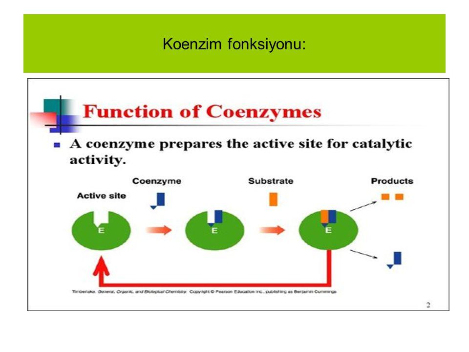 Koenzim fonksiyonu: