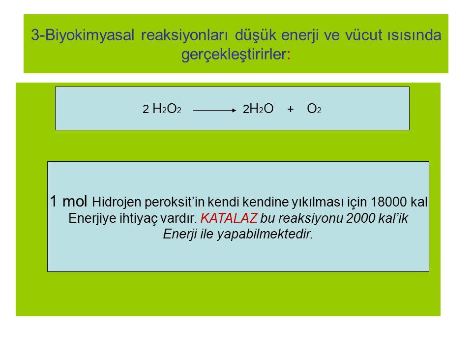 3-Biyokimyasal reaksiyonları düşük enerji ve vücut ısısında gerçekleştirirler: 2 H 2 O 2 2 H 2 O + O 2 1 mol Hidrojen peroksit'in kendi kendine yıkılm