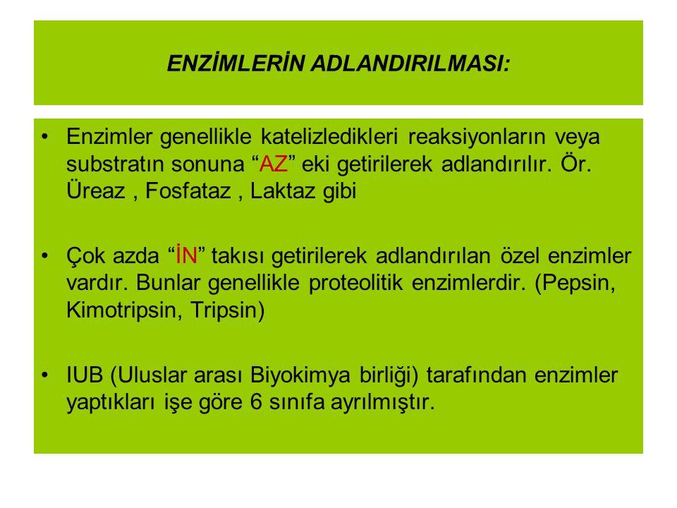 """ENZİMLERİN ADLANDIRILMASI: Enzimler genellikle katelizledikleri reaksiyonların veya substratın sonuna """"AZ"""" eki getirilerek adlandırılır. Ör. Üreaz, Fo"""