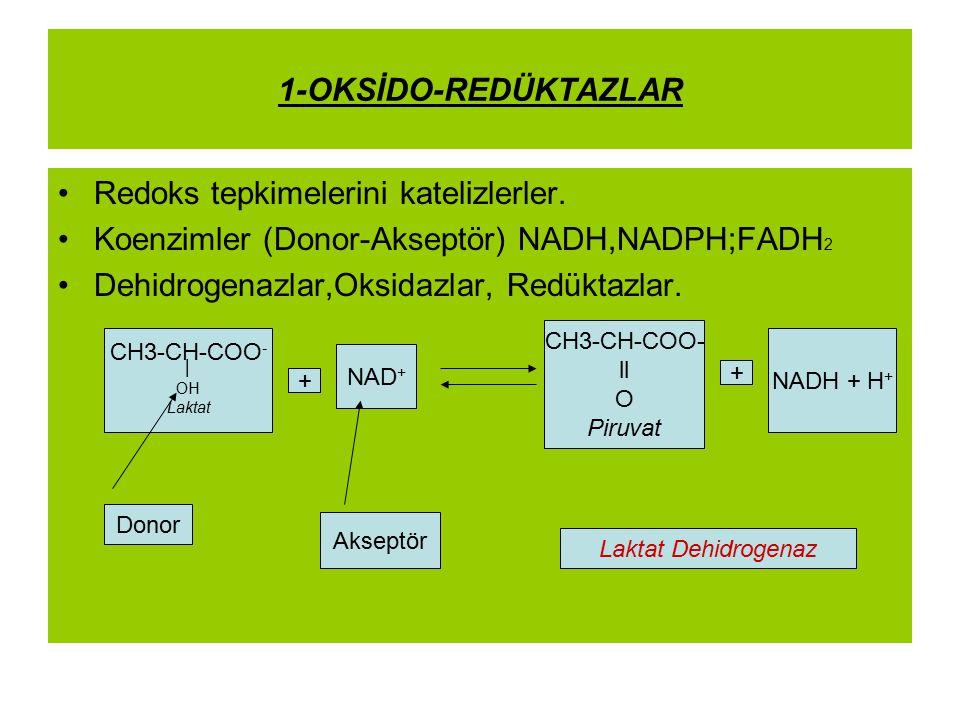 1-OKSİDO-REDÜKTAZLAR Redoks tepkimelerini katelizlerler. Koenzimler (Donor-Akseptör) NADH,NADPH;FADH 2 Dehidrogenazlar,Oksidazlar, Redüktazlar. CH3-CH