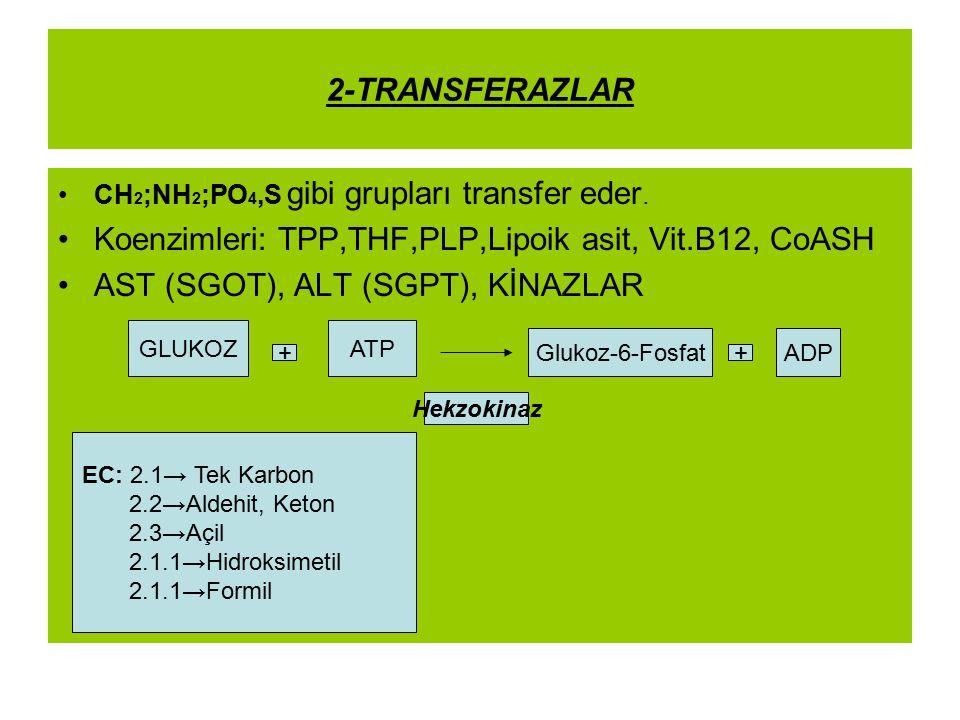 2-TRANSFERAZLAR CH 2 ;NH 2 ;PO 4,S gibi grupları transfer eder. Koenzimleri: TPP,THF,PLP,Lipoik asit, Vit.B12, CoASH AST (SGOT), ALT (SGPT), KİNAZLAR