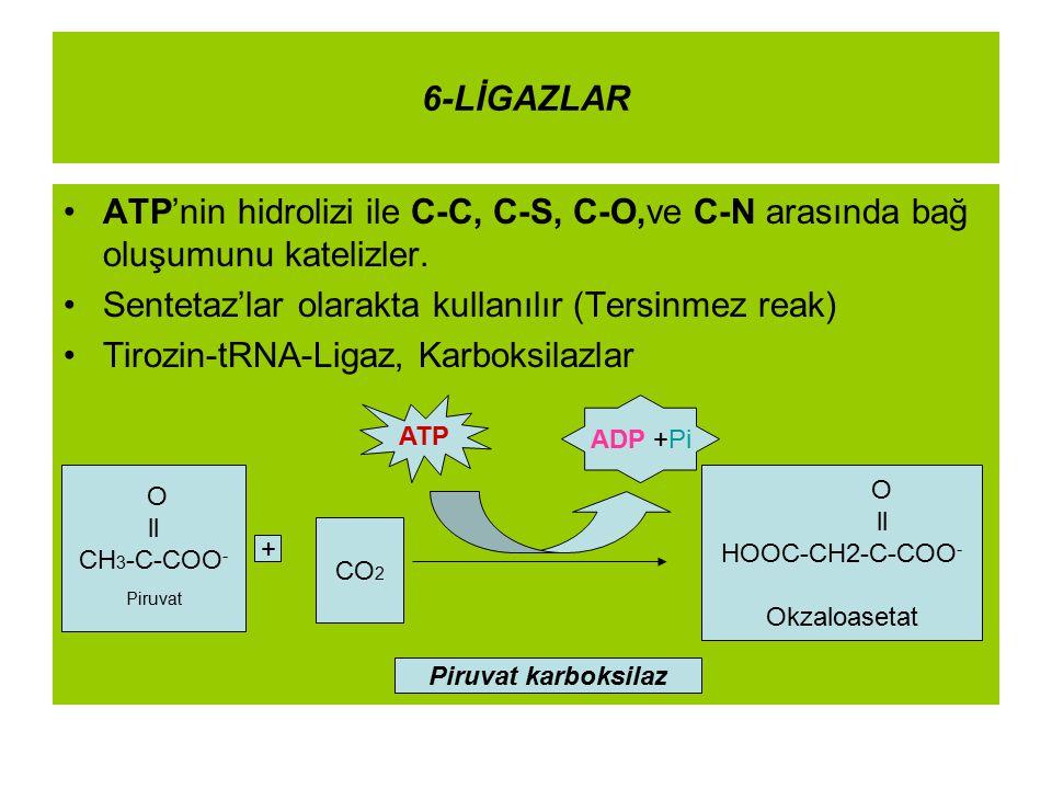 6-LİGAZLAR ATP'nin hidrolizi ile C-C, C-S, C-O,ve C-N arasında bağ oluşumunu katelizler. Sentetaz'lar olarakta kullanılır (Tersinmez reak) Tirozin-tRN