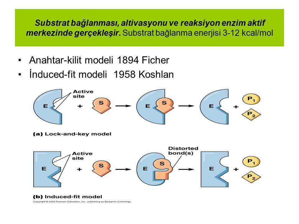 Substrat bağlanması, altivasyonu ve reaksiyon enzim aktif merkezinde gerçekleşir. Substrat bağlanma enerjisi 3-12 kcal/mol Anahtar-kilit modeli 1894 F