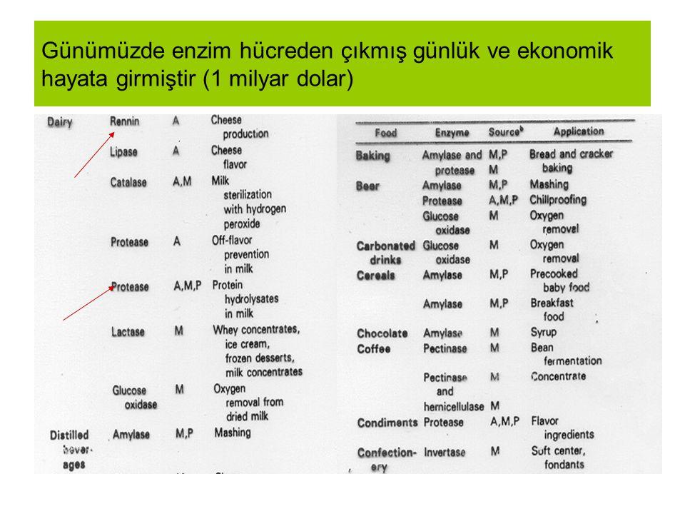 Lipazlar: Deterjan end Proteazlar:besin end (papain) Karbohidrazlar besin end Tekstil (Selülaz) Farmakoliji (ilaç,) Diagnostik