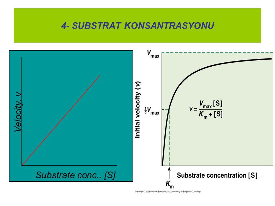 4- SUBSTRAT KONSANTRASYONU Velocity, v Substrate conc., [S]