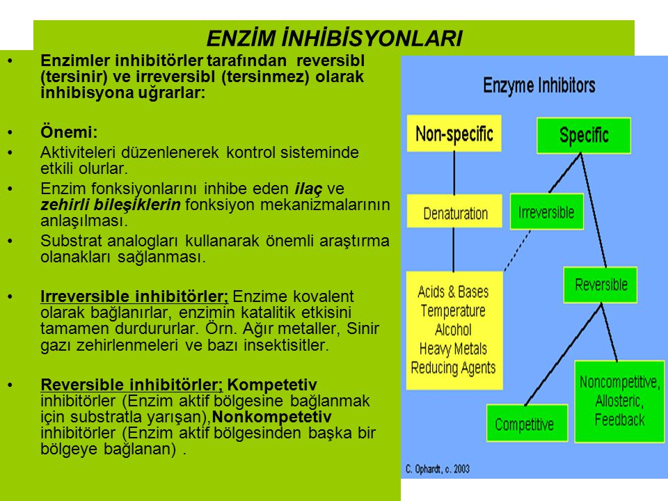 ENZİM İNHİBİSYONLARI Enzimler inhibitörler tarafından reversibl (tersinir) ve irreversibl (tersinmez) olarak inhibisyona uğrarlar: Önemi: Aktiviteleri