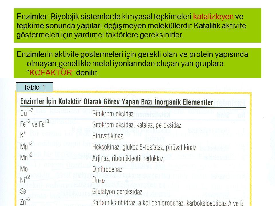 METAL İYON Karbonik Anhidraz
