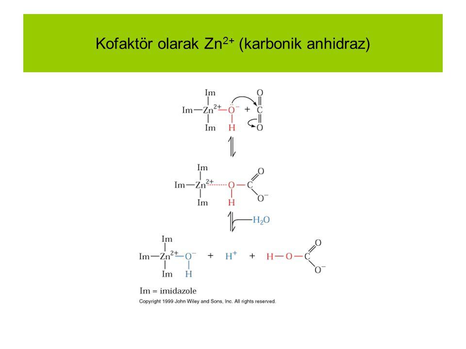 Kofaktör olarak Zn 2+ (karbonik anhidraz)