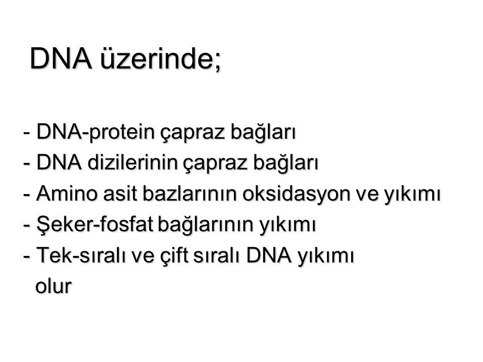 DNA üzerinde; DNA-protein çapraz bağları - DNA-protein çapraz bağları - DNA dizilerinin çapraz bağları - DNA dizilerinin çapraz bağları - Amino asit b