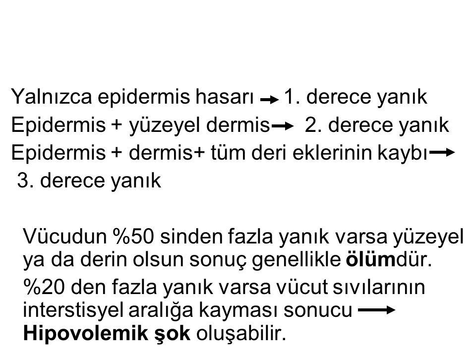 Yalnızca epidermis hasarı 1. derece yanık Epidermis + yüzeyel dermis 2. derece yanık Epidermis + dermis+ tüm deri eklerinin kaybı 3. derece yanık Vücu