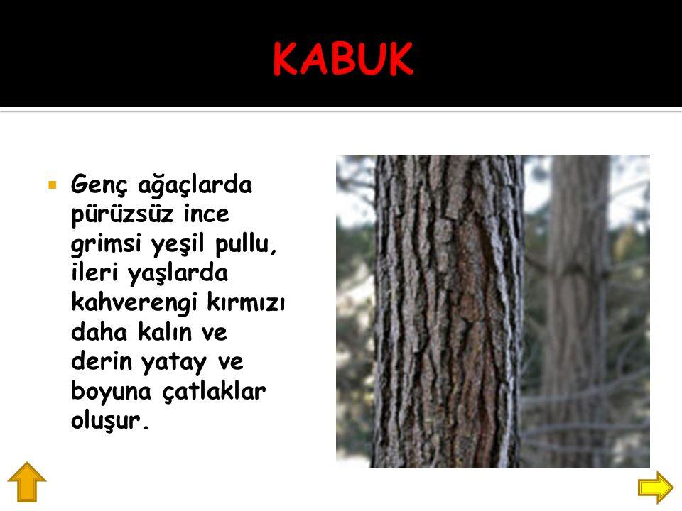  Genç ağaçlarda pürüzsüz ince grimsi yeşil pullu, ileri yaşlarda kahverengi kırmızı daha kalın ve derin yatay ve boyuna çatlaklar oluşur.