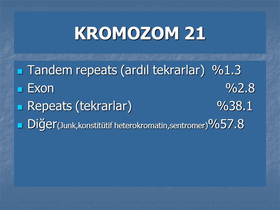 KROMOZOM 21 Tandem repeats (ardıl tekrarlar) %1.3 Tandem repeats (ardıl tekrarlar) %1.3 Exon %2.8 Exon %2.8 Repeats (tekrarlar) %38.1 Repeats (tekrarl
