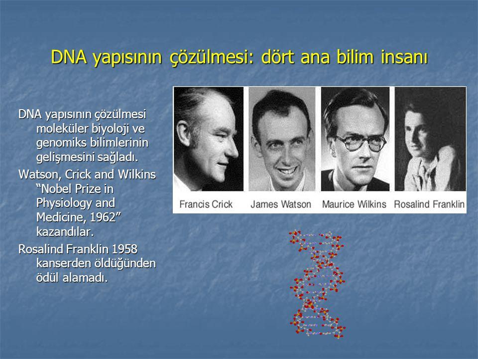 DNA yapısının çözülmesi: dört ana bilim insanı DNA yapısının çözülmesi moleküler biyoloji ve genomiks bilimlerinin gelişmesini sağladı. Watson, Crick
