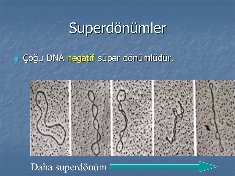 Superdönümler Çoğu DNA negatif süper dönümlüdür. Çoğu DNA negatif süper dönümlüdür. Daha superdönüm