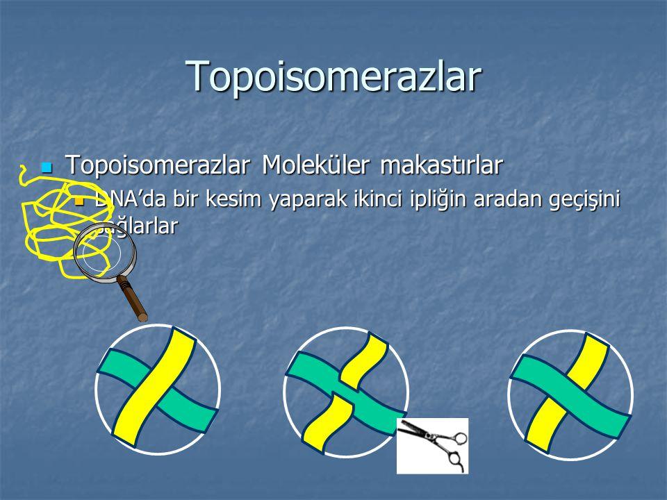 Topoisomerazlar Topoisomerazlar Moleküler makastırlar Topoisomerazlar Moleküler makastırlar DNA'da bir kesim yaparak ikinci ipliğin aradan geçişini sa