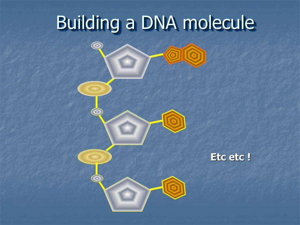 Etc etc ! Building a DNA molecule