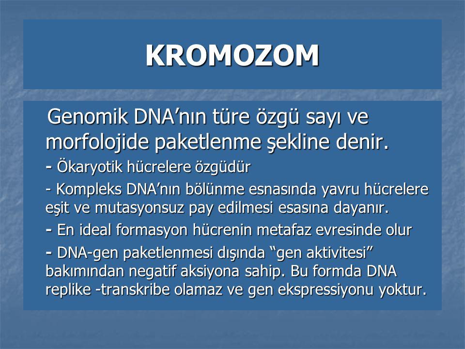 KROMOZOM -DNA PAKETLENMESİ Kademe Birim Adı Büyüklüğü Alt Birimleri 1- Primer DNA 20 Aº = 2nm Çift heliks zincir Şeker+Fosfat+baz+Hidrojen Bağları 2- Sekonder Nükleozom 100 Aº = 10nm 146 bç DNA Histon oktomeri (2XH 2 A,H 2 B,H 3, H 4 ) Histon oktomeri (2XH 2 A,H 2 B,H 3, H 4 ) 3- Tersiyer Selenoid 300 Aº =30nm 6 adet nükleozom 10-100 kb'lık Looplar 4- Quarterner Süpercolid 600 Aº =60nm 150-300 kb'lık Looplar  KROMOZOM : Pre ve Postmetafaz evrelerinde kromozom çapı Pre ve Postmetafaz evrelerinde kromozom çapı 750-900 nm arasında değişir.