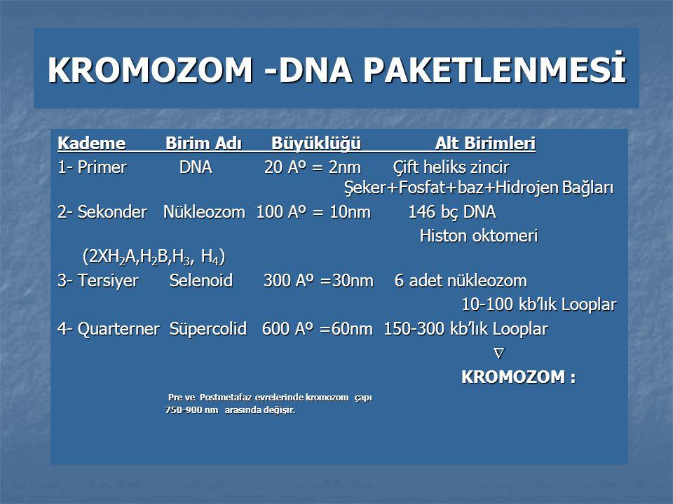 KROMOZOM -DNA PAKETLENMESİ Kademe Birim Adı Büyüklüğü Alt Birimleri 1- Primer DNA 20 Aº = 2nm Çift heliks zincir Şeker+Fosfat+baz+Hidrojen Bağları 2-