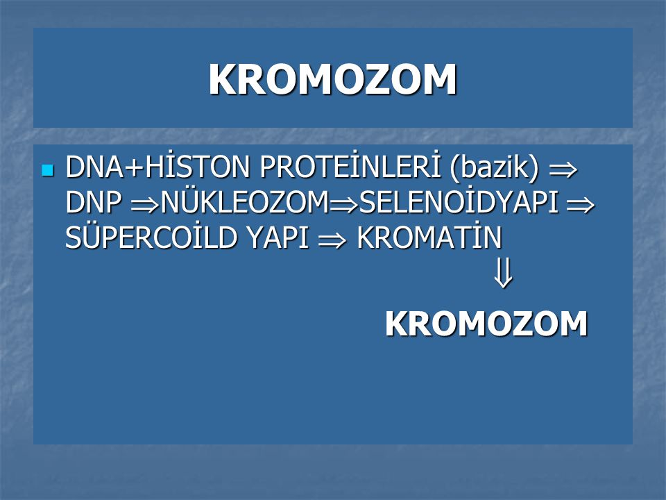 KROMOZOM DNA+HİSTON PROTEİNLERİ (bazik)  DNP  NÜKLEOZOM  SELENOİDYAPI  SÜPERCOİLD YAPI  KROMATİN  DNA+HİSTON PROTEİNLERİ (bazik)  DNP  NÜKLEOZ