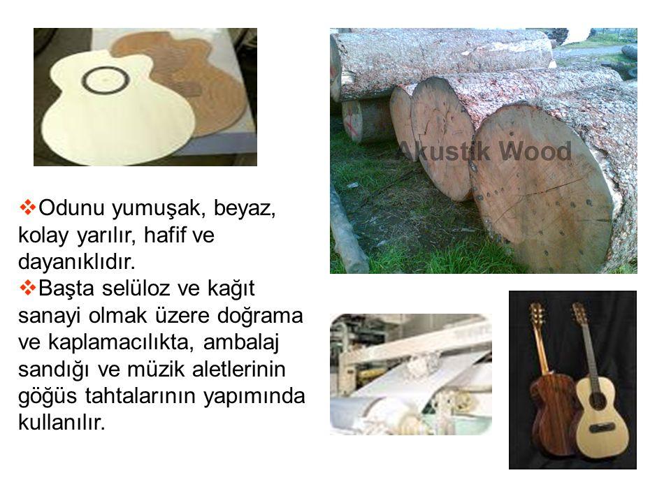  Odunu yumuşak, beyaz, kolay yarılır, hafif ve dayanıklıdır.  Başta selüloz ve kağıt sanayi olmak üzere doğrama ve kaplamacılıkta, ambalaj sandığı v