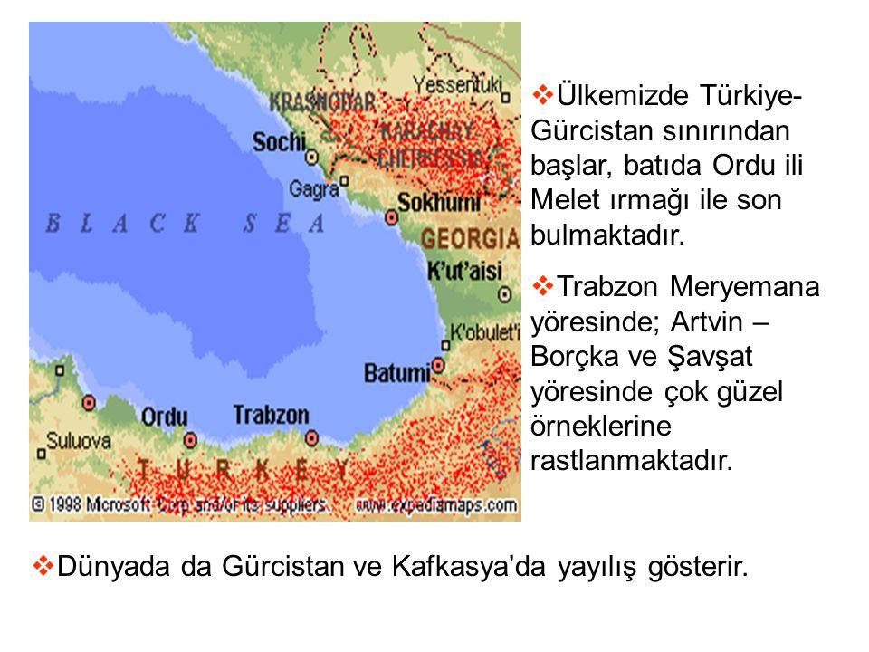  Ülkemizde Türkiye- Gürcistan sınırından başlar, batıda Ordu ili Melet ırmağı ile son bulmaktadır.  Trabzon Meryemana yöresinde; Artvin – Borçka ve